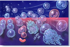 056-Stem-Cell-Maturation