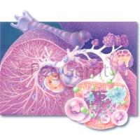 Asthma (Image 40)