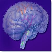 Headache Mechanism-of-Action 366