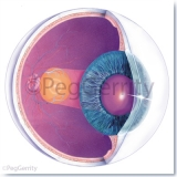 026 Healthy Eye