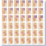 40 Weekly Pregnancy Images set 490N