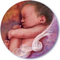 497 Pregnancy 2017 INSET
