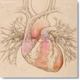 074 Heart w Pulmonary Vessels
