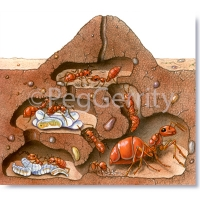 105-Ant-Colony